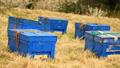 養蜂箱 40030739