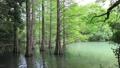 風に揺れる新緑_九大の森(キャノンフルサイズ一眼5DSRで撮影) 40056284