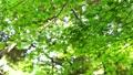 葉 森 林の動画 40086708