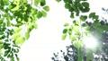 葉 森 林の動画 40087562