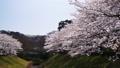 満開の桜のある風景 40111198