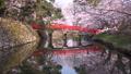 桜咲く弘前城 鷹丘橋 FIX 40167185
