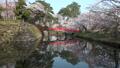 桜咲く弘前城 鷹丘橋 FIX 40167186
