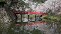 桜咲く弘前城 西濠 タイムラプス 40167188