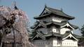 桜咲く弘前城 天守閣  パン 40167197