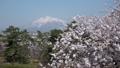 弘前城からの桜と岩木山 パン 40167208