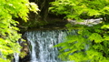 清流 風景 自然の動画 40170853