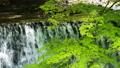清流 風景 自然の動画 40170854