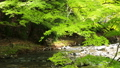 清流 川 風景の動画 40170899