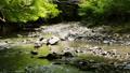 清流 川 風景の動画 40170901