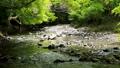 清流 川 風景の動画 40170902
