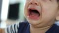 ร้องไห้,เด็ก,ทารก 40234598