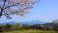 桜咲く春の米子城跡と大山 番所跡 40394807