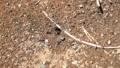 蚂蚁的巢蚂蚁巢蚂蚁在那里昆虫洞穴生物昆虫花园土壤自然入口群智力 40438367