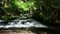 自然 風景 川の動画 40442169