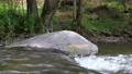 Boulder in the water flow 40446026