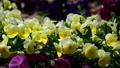 ดอกไม้,ไม้,โรงงาน 40457674