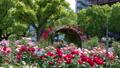 福山バラ公園1 40467469