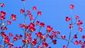 ต้นไม้,ดอกไม้,ฤดูใบไม้ผลิ 40477282