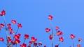 ต้นไม้,ดอกไม้,ฤดูใบไม้ผลิ 40477283