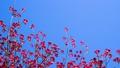 ต้นไม้,ดอกไม้,ฤดูใบไม้ผลิ 40477284