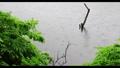 新緑の木々 雨 池 梅雨イメージ 40485904