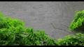 新緑の木々 雨 池 梅雨イメージ 40485906