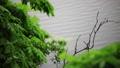 新緑の木々 雨 池 梅雨イメージ 40485907