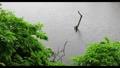 新緑の木々 雨 池 梅雨イメージ 40485908