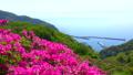 春の美保関 関の五本松公園のツツジと美保関港 40540084