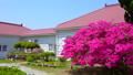 rose bay, azalea, azaleas 40540092