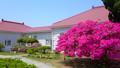 rose bay, azalea, azaleas 40540093