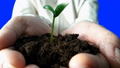 Seedling Growing In Hands. Time Lapse. 40582439