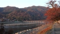 togetsu bridge, maple, yellow leafe 40620446