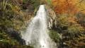 10月 紅葉の大倉滝 せせらぎ街道最大の滝  40620449