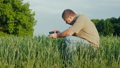 A middle-aged agronomist photographs green wheat sprouts 40660490
