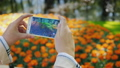 Female hands with a smartphone. Photographs a beautiful flower bed with flowers 40665521