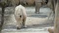 Baby rhino standing in the zoo 40725293