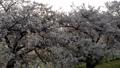 空撮 風景 国領川の動画 40778743