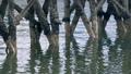 Pier Legs Reflecting 40795520