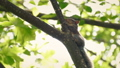 Squirrel High On Tree Branch In Breeze 40795521
