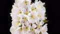 花 开花 花朵 40797035