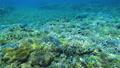 珊瑚 サンゴ 水中の動画 40806155