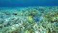 珊瑚 サンゴ 水中の動画 40806156