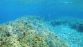 珊瑚 サンゴ 水中の動画 40806170