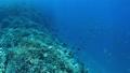 珊瑚 サンゴ 水中の動画 40806171