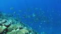 珊瑚 サンゴ 水中の動画 40806174
