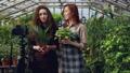 女性 ハウス ビニールハウスの動画 40808585