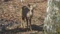 deer deers animal 40834550