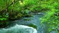 渓流 自然 風景の動画 40834585